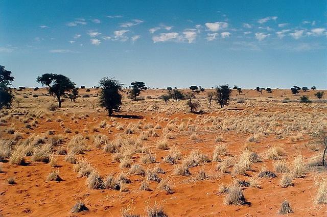 Kalahari desert plants kalahari desert for Definition von boden