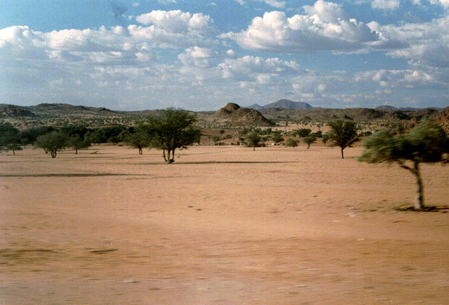 Vegetation in Kalahari Desert